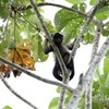 La selva équatorienne